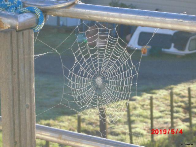 20190504 spinnennetz