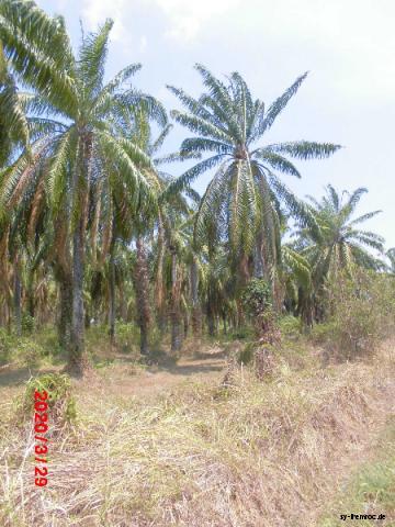 20200329 palmenplantage